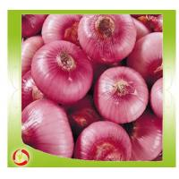 Buy cheap 2015 New crop red onion with good quality from wholesalers