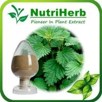 Best Natural Stinging Nettle Extract,Stinging nettle Powder,Nettle Beta sitosterol,Nettle Extract Silica wholesale