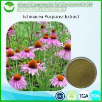 Buy cheap Echinacea Extract from wholesalers