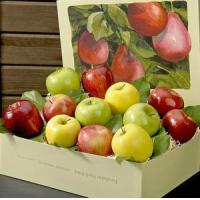 APPLE MEDLEY NO.39 deliver gift hamper to shenzhen