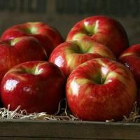 Best HONEYCRISP APPLES NO.32 deliver gift hamper to shenzhen wholesale