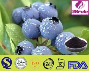 Cheap Pure Natural Acai Berry Powder for sale