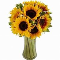Best Endless Summer Sunflower NO.26 delivery flower to china wholesale