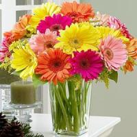 Best Colorful Daisies NO.20 delivery flower to china wholesale