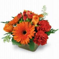 Best Sunrise Surprise NO.16 delivery flower to china wholesale