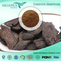Best Cistanche Tubulosa Extract Supplier Wholesale / ,cistanoside,echinacoside,acteoside wholesale