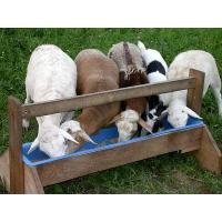 Cheap blog How to Correctly Feed Sheep with Feed Pellets for sale
