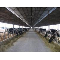 Best Pre-engineered Steel Framing Systems Breeding Cow / Horse With Roof Panels wholesale