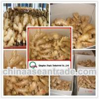 China Agriculture Hot sell New crop air dried ginger price on sale