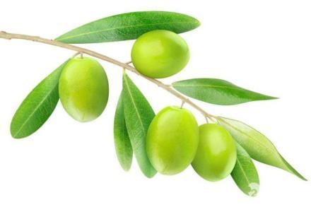 Cheap Olive Leaf Extract for sale