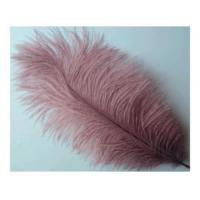 Plume Feathers Art #: BE-3101