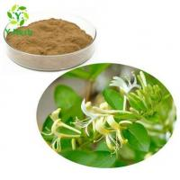 Best HoneySuchle Flowers Extract wholesale