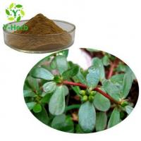 Cheap Purslane Extract for sale