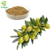 Cheap Olive Leaf Extract Oleuropein Powder for sale